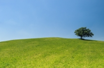 hill-meadow-tree-green